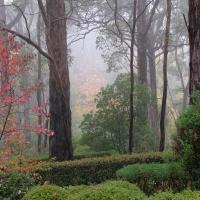 Mt.Lofty Botanic Garden